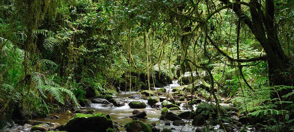 madagascar-rainforest